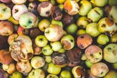 Fundo de muitas maçãs más imagens de stock royalty free