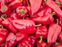 Fundo de muitas pimentas vermelhas grandes Imagem de Stock