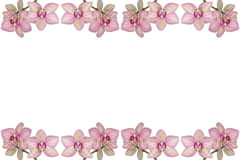 Fundo de orquídeas de florescência Fotografia de Stock
