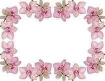 Fundo de orquídeas de florescência Foto de Stock