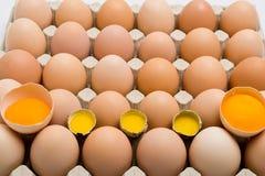 Fundo de ovos da galinha e de codorniz em uma bandeja do cartão Fotos de Stock Royalty Free