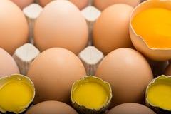 Fundo de ovos da galinha e de codorniz em uma bandeja do cartão Imagens de Stock