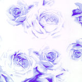 Fundo de papel abstrato bonito das rosas do Close-up Imagens de Stock