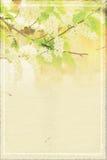 Fundo de papel abstrato da mola com ramo da cereja de pássaro na flor fotos de stock