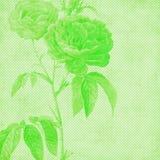 Fundo de papel botânico de Florals do vintage ilustração do vetor