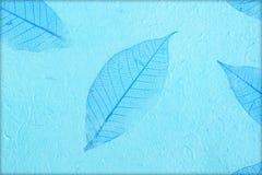 Fundo de papel da textura da amoreira Fotos de Stock