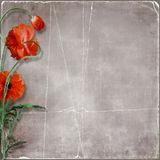 Fundo de papel do Grunge com flores da papoila Foto de Stock