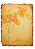 Fundo de papel queimado vintage imagem de stock