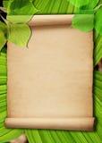Fundo de papel velho com folhas verdes fotografia de stock