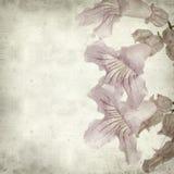 Fundo de papel velho Textured Fotografia de Stock Royalty Free