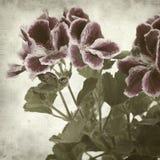 Fundo de papel velho Textured Imagem de Stock Royalty Free