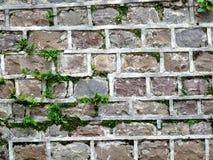 Fundo de pedra da parede do bloco Fotografia de Stock