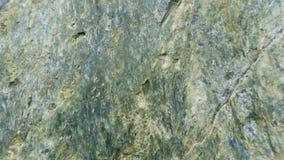 Fundo de pedra da textura Serpentinite Fotos de Stock