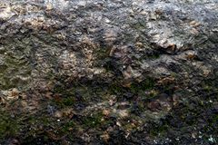 fundo de pedra velho do close-up com um pouco musgo imagem de stock