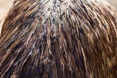 Fundo de penas da avestruz Imagens de Stock Royalty Free