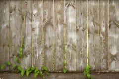 Fundo de placas de madeira fotografia de stock