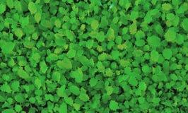 Fundo de plantas verdes pequenas imagem de stock royalty free