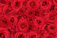 Fundo de Rosa Fotos de Stock