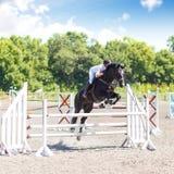 Fundo de salto da competição do cavaleiro Fotografia de Stock