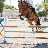 Fundo de salto da competição do cavaleiro Foto de Stock Royalty Free