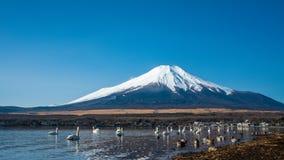 Fundo de Serene Lake Fuji Mountain Scenery fotos de stock royalty free