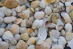 Fundo de shell pequenos do mar, contínuo Imagem de Stock