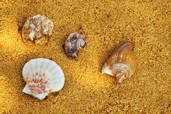 Fundo de Sunlights da areia da praia da concha do mar Fotografia de Stock