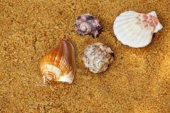 Fundo de Sunlights da areia da praia da concha do mar Fotos de Stock