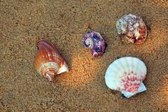 Fundo de Sunlights da areia da praia da concha do mar Fotografia de Stock Royalty Free
