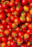 Fundo de tomates frescos Foto de Stock Royalty Free