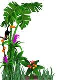 Fundo de Toucan ilustração royalty free