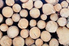 Fundo de troncos empilhados Fotos de Stock