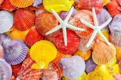 Fundo de um número concha do mar da vieira e estrela ou de estrela do mar colorida de mar Fotografia de Stock