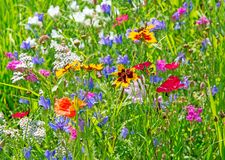 Fundo de um prado do verão com wildflowers Imagens de Stock Royalty Free