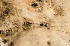 Fundo de uma casca de árvore imagem de stock