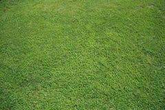 Fundo de uma grama verde Fotos de Stock Royalty Free