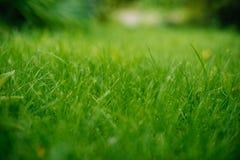 Fundo de uma grama verde Textura da grama verde fotografia de stock