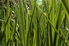 Fundo de uma textura da grama retroiluminada fotografia de stock