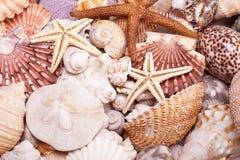 Fundo de vários conchas do mar, estrela do mar e cavalo marinho Imagens de Stock Royalty Free