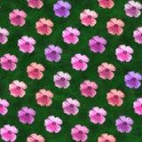 Fundo decorativo da flor Teste padrão colorido sem emenda geranium imagens de stock