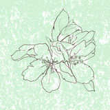 Fundo delicado com a flor da árvore de maçã Fotos de Stock Royalty Free