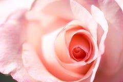 Fundo delicado com pétalas cor-de-rosa Apropriado para convites e cartão do casamento Fundo para redes sociais naughty imagens de stock royalty free