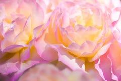 Fundo delicado com pétalas cor-de-rosa Apropriado para convites e cartão do casamento Fundo para redes sociais naughty foto de stock