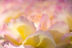 Fundo delicado com pétalas cor-de-rosa Apropriado para convites e cartão do casamento Fundo para redes sociais naughty imagem de stock