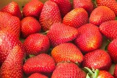 fundo delicioso e suculento das morangos Foto de Stock