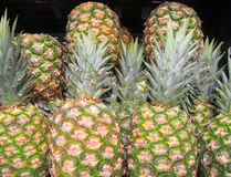 Fundo do abacaxi (comosus do ananás). Fotos de Stock Royalty Free