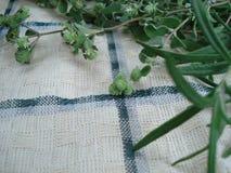 Fundo do algodão com um quadro de plantas verdes: alfazema, orégano, alecrins Ervas medicinais e aromáticas em uma textura do tec Imagem de Stock Royalty Free