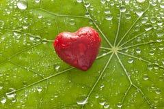 Fundo do amor do coração da folha Fotos de Stock