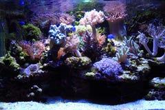 fundo do aquário do mar Foto de Stock Royalty Free