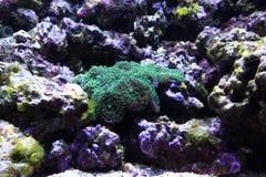 fundo do aquário do mar Imagens de Stock